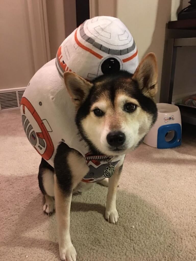 Toy Story Dog Halloween Costumes
