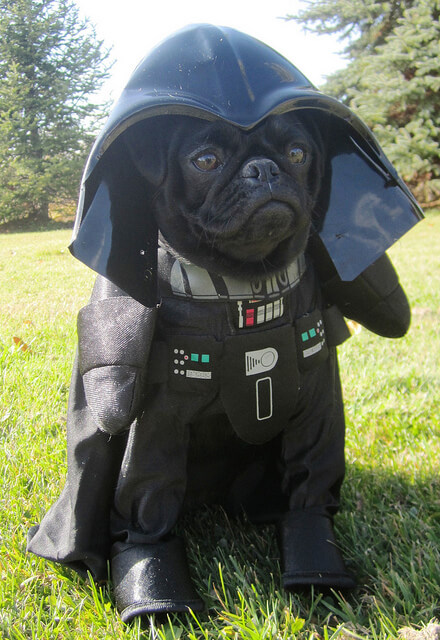 star wars animal costumes 21