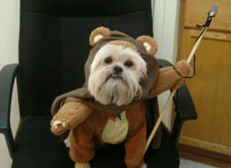 star wars animal costumes 23