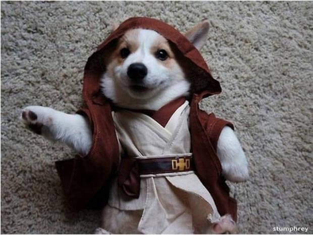 star wars dog costumes 3