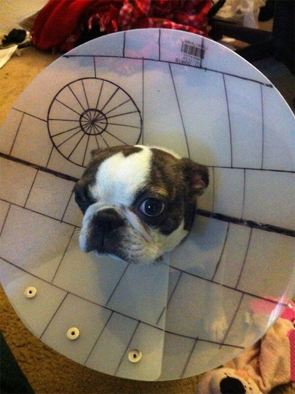 star wars dog costumes 4