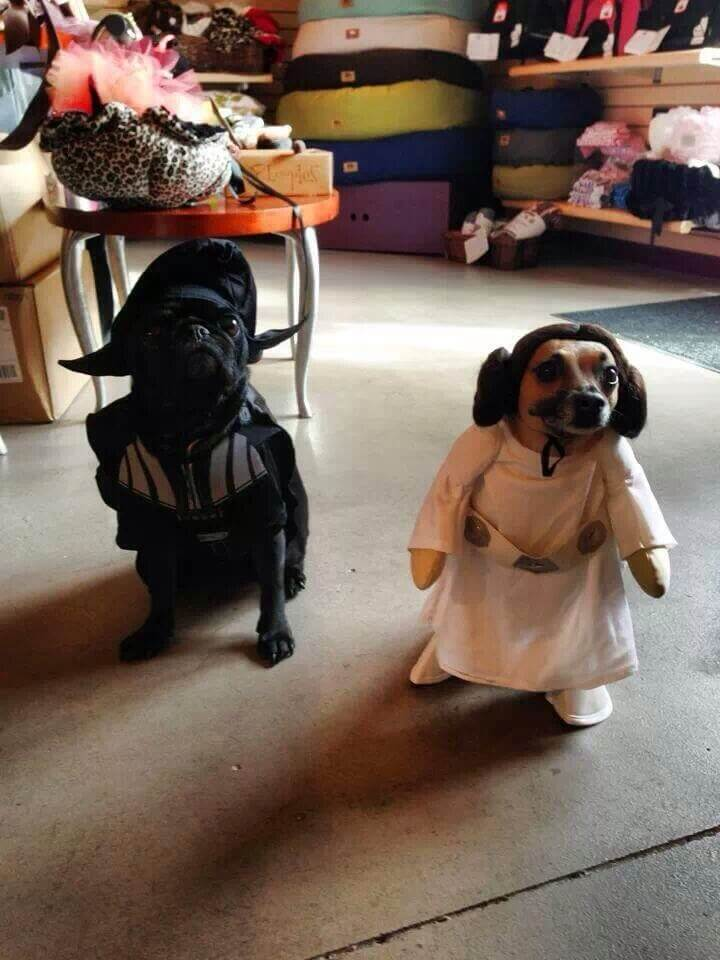 star wars dog costumes 5