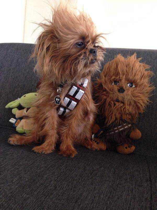 star wars pet costumes 7