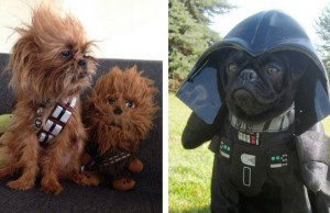 star wars dog costumes feat