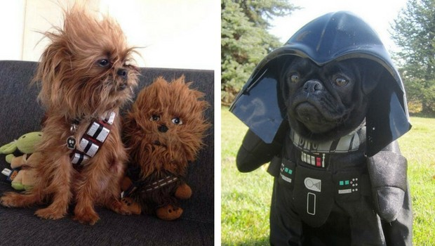 These Star Wars Dog Costumes Are So Cute They Should Be Cast To The Movie & These Star Wars Dog Costumes Are So Cute They Should Be Cast To The ...