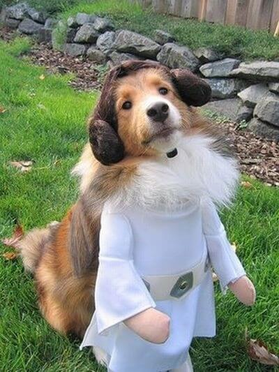 star wars animal costumes