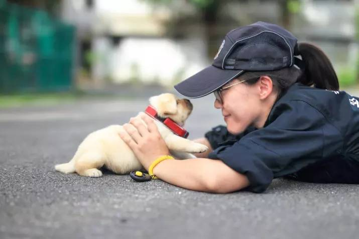 New Taipei Police Department k9 unit puppies 11