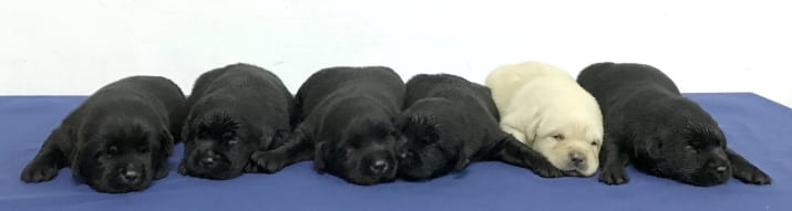 New Taipei Police Department k9 unit puppies 2