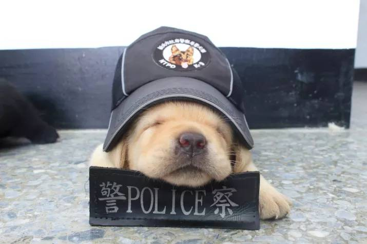 New Taipei Police Department k9 unit puppies 5