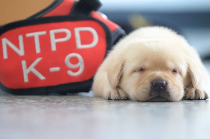 New Taipei Police Department k9 unit puppies
