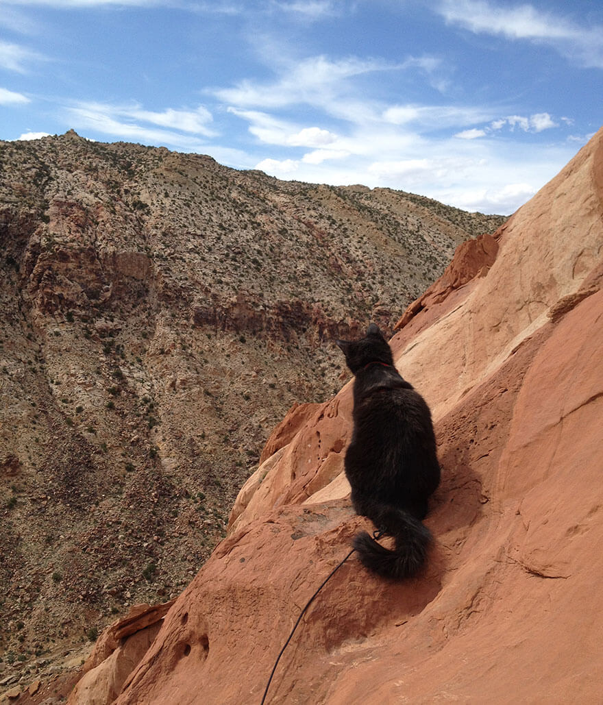 adventure cat Millie 11