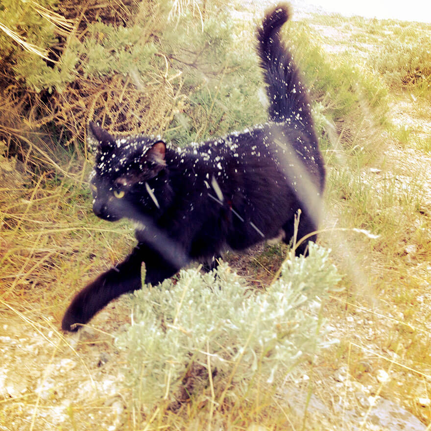 adventure cat Millie 12