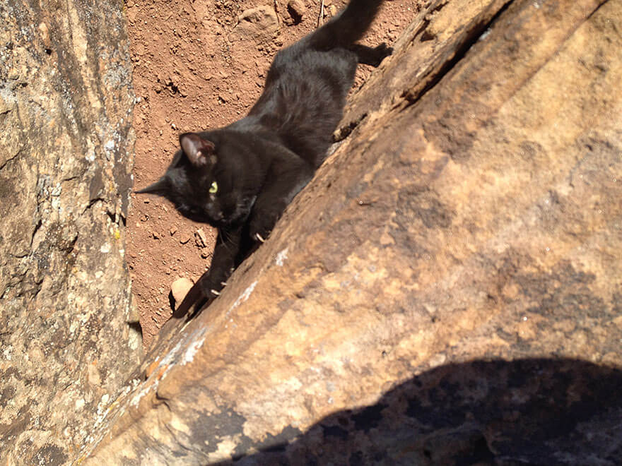 adventure cat Millie Craig Armstrong 17