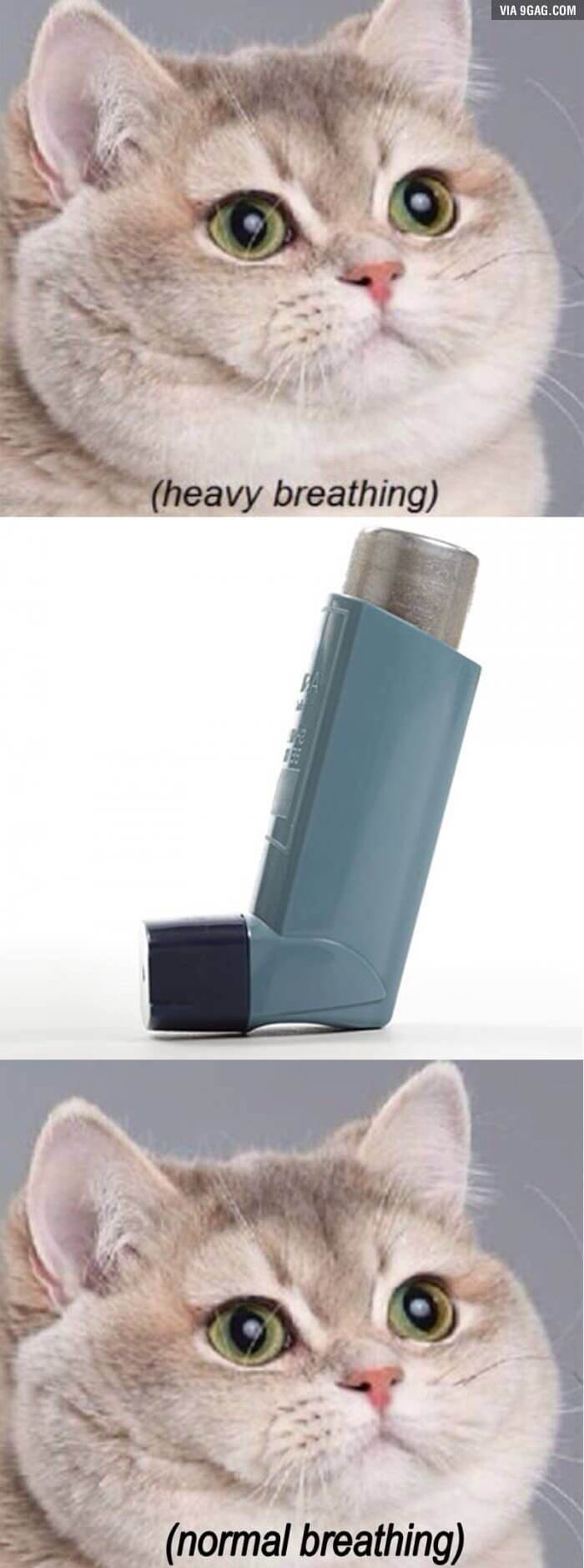 asthma memes 14