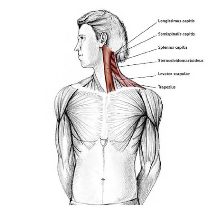 how to release tension in your neck 2