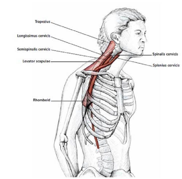 how to release tension in your neck 6