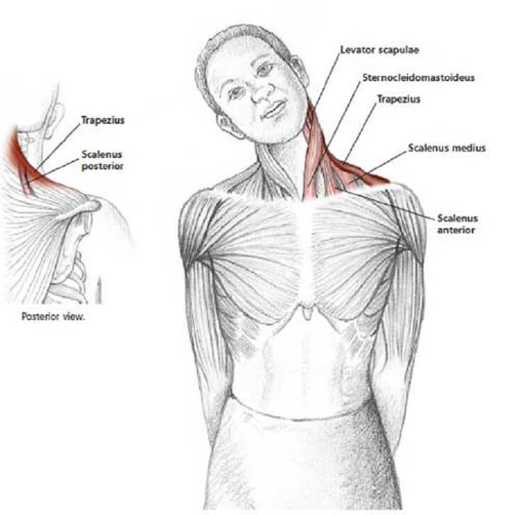 how to release tension in your neck