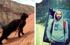 millie the adventure cat feat (1)