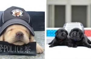 new delhi k9 puppies feat (1)
