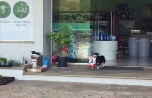 pituco dog goes shopping alone feat (1)
