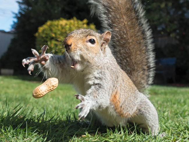 rsz_cute-squirrel-photography-361__700