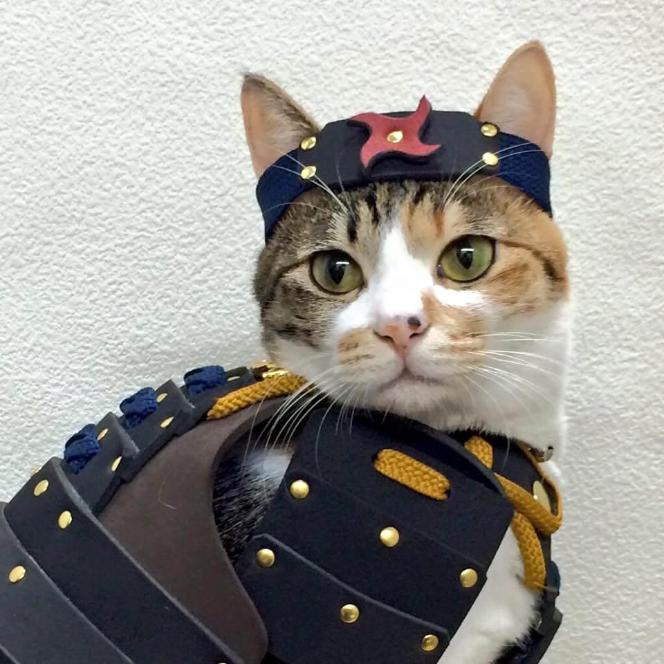 samurai cat armour 2