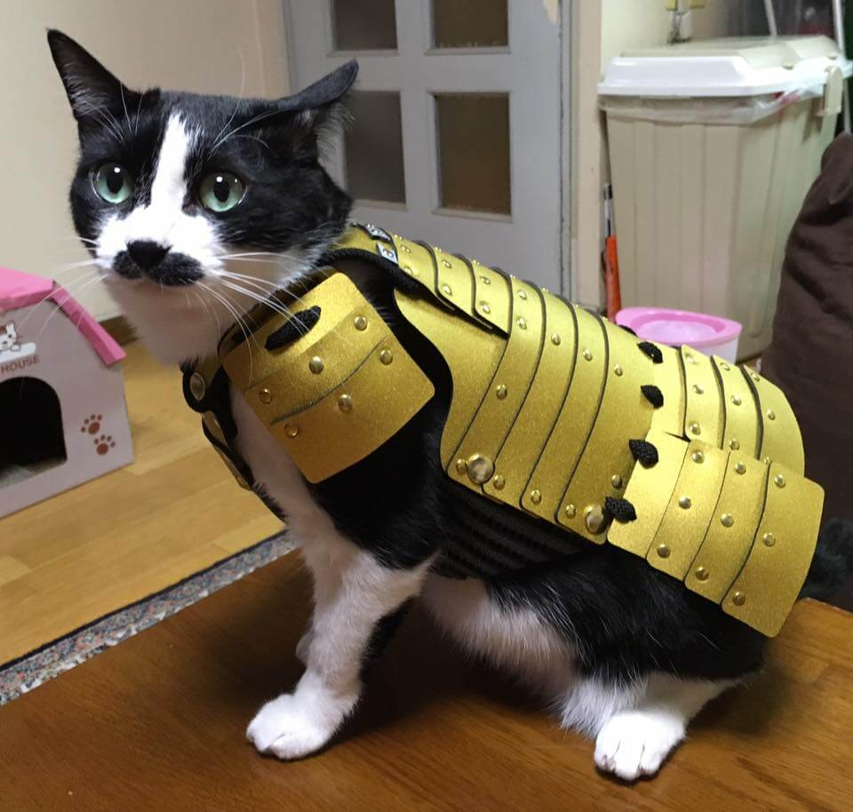 samurai cat armour 3