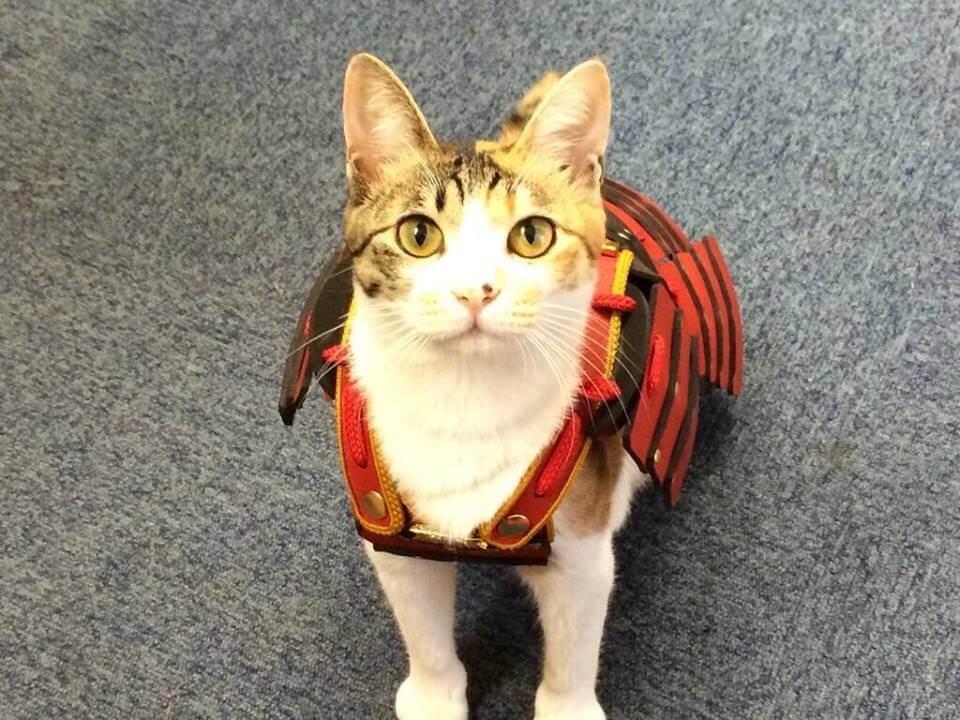 samurai cat armour 4