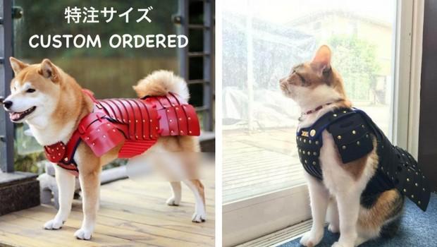 samurai cat armour feat