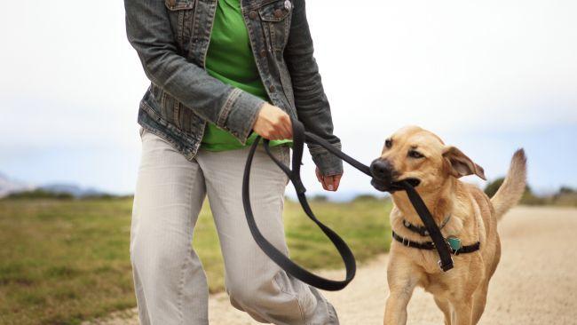 walking-dog