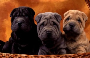 adorable puppy breeds feat (1)