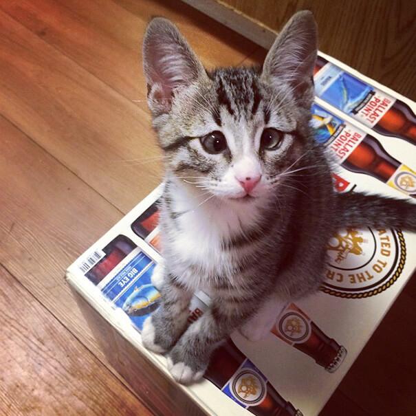 bum the cat 3 (1)