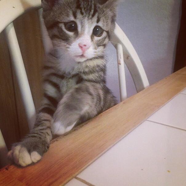 bum the cat 4 (1)