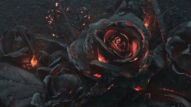 burning roses feat (1)