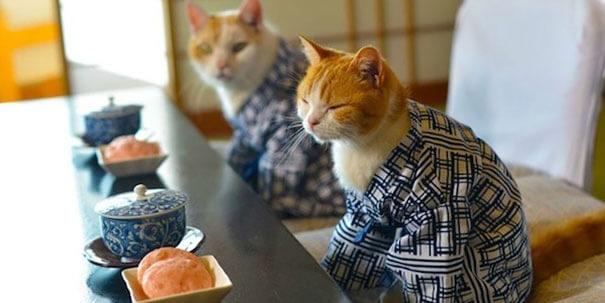 cat kimono 1 (1)