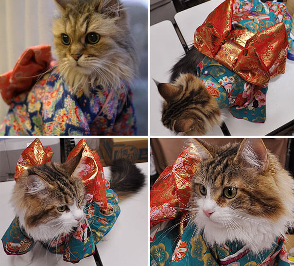 cat japanese outfit 10 (1)