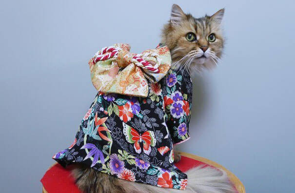 cat japanese outfit 11 (1)