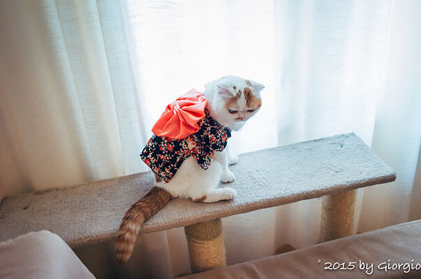 cat japanese outfit 12 (1)