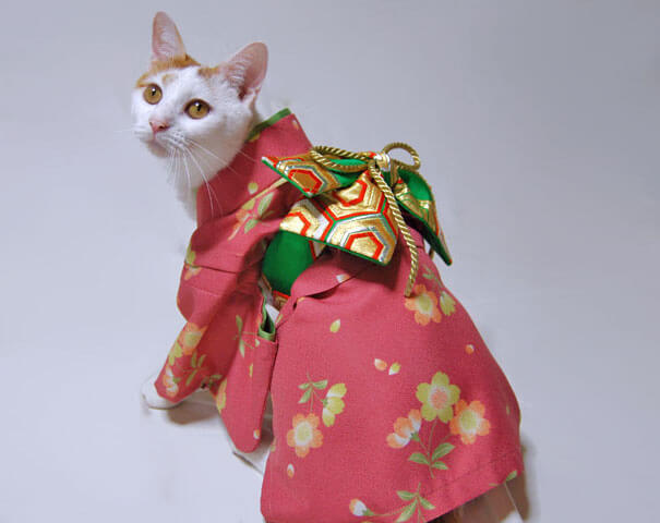 cat japanese outfit 13 (1)