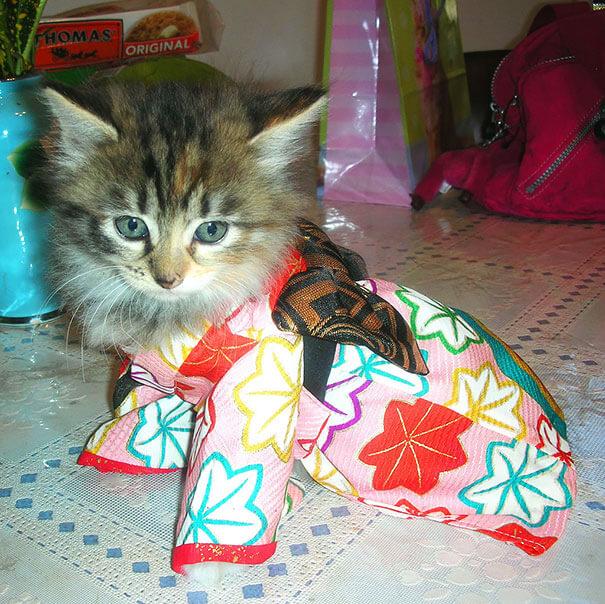 pet kimono 14 (1)