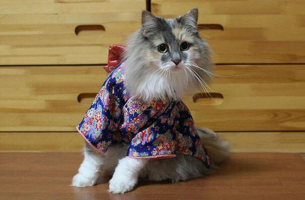 pet kimono 15 (1)