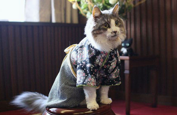 pet kimono 16 (1)