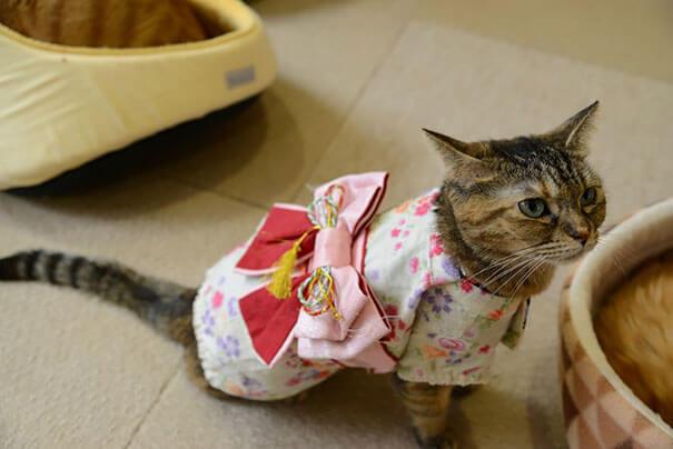 pet kimono 17 (1)