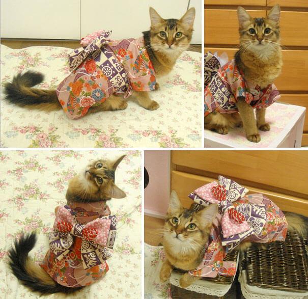 pet kimono 18 (1)
