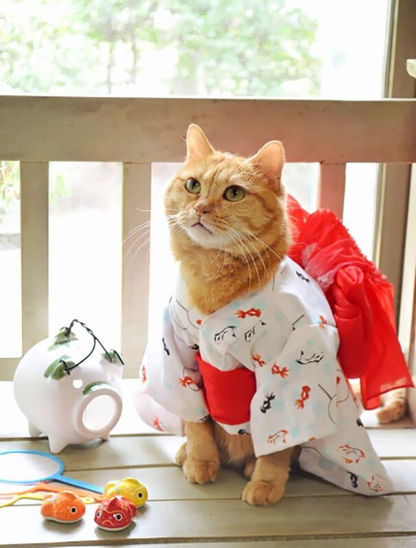 cat kimono 2 (1)