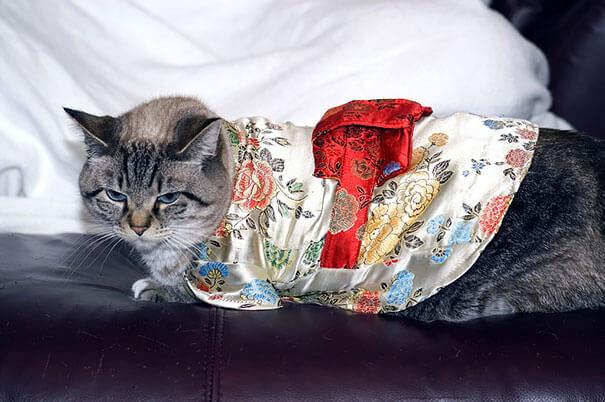pet kimono 20 (1)