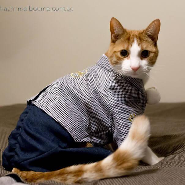 cat kimono 21 (1)