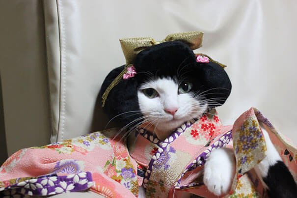 cat japanese outfit 3 (1)