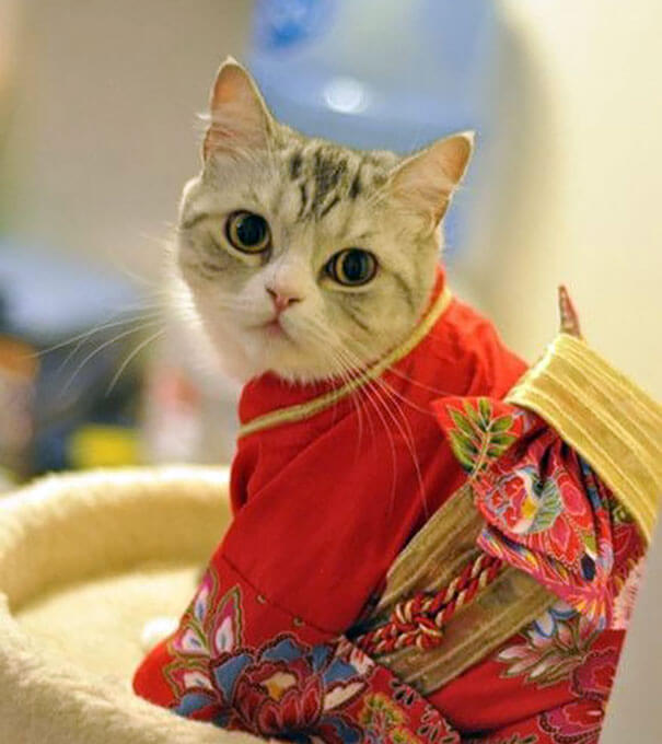 cat japanese outfit 4 (1)