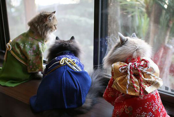 cat japanese outfit 5 (1)